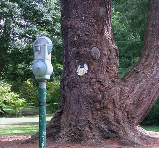 Park Meter in the Nuneham Courtenay Arboretum